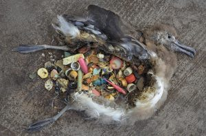 Índices de Contaminación e Impactos en las Especies Nativas